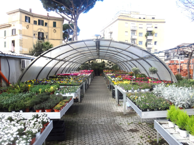 piante da esterno